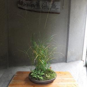 寄せ植えの鉢にキノコが・・・