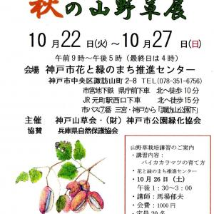 神戸山草会 秋の山野草展示会 作品搬入です。
