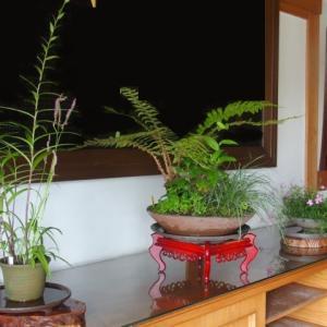 菩提寺の玄関へ(68)オニユリ&ネジバナ、イノデの寄せ植え、タカ(2015/7/12アップ済み)