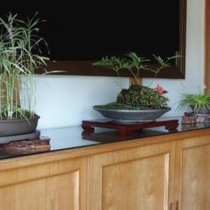 菩提寺の玄関へ(96)十和田アシ&ネジバナ、寄せ植え(カワサツ (2016/7/5アップ済み)