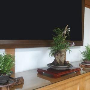 菩提寺の玄関へ(131)センボンギク、フウラン、ヤマシノブ (2017/7/28アップ済み)