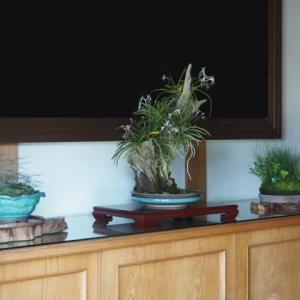 菩提寺の玄関へ(163)木漏れ日草、フウラン、ヒメトクサ (2018/7/16アップ済み)