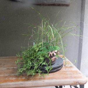 寄せ植え(23号) ヒメ矢羽ススキ・キリシマリンドウ・ミヤマオダマキ