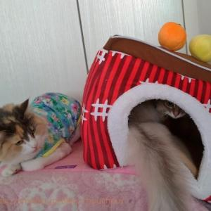 どうしてもこのベッドがいいの!