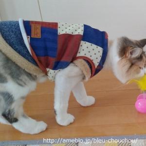 ダイソー猫オモチャ