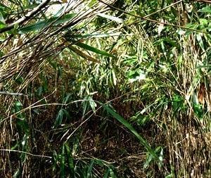 もくたん徘徊:13 検索の藪