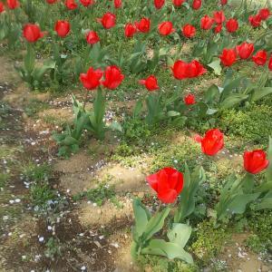 花の丘公園にて
