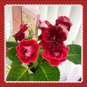 綺麗に咲いてます^^
