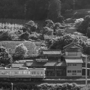 20200517 せんがまち棚田と東海道線 その4