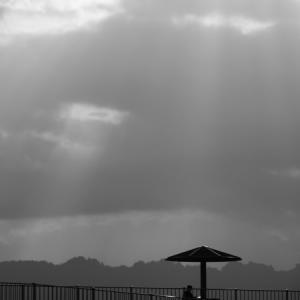 20210319 富士山静岡空港、棚田、最後は海岸散歩 4(完)