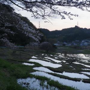 20210324 桜咲くせんがまち棚田 3(完)