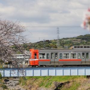 20210403 岳南鉄道と龍巌橋の桜 3