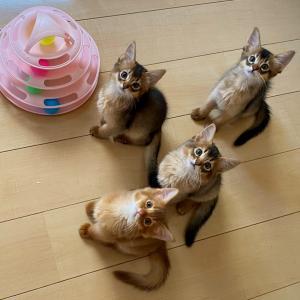 子猫の成長&嬉しいお便り♪