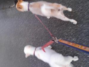 シッター 犬のセント&マリー