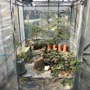 温室をリセット♪サボテンの水やりってどうなの?