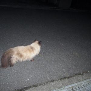 真っ暗なお散歩ダイナ