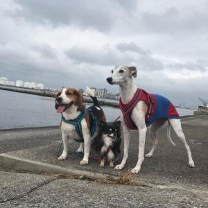千葉賢犬倶楽部 ハロウィンカップ 2019