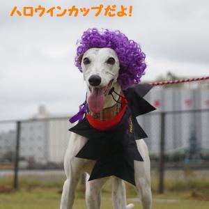 千葉賢犬倶楽部 ハロウィンカップ 2019 ②