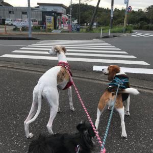 ヤキトリ公園散歩。