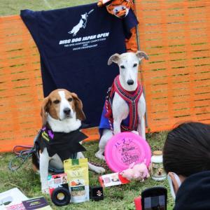 DDJ 愛犬と遊ぶ大会4
