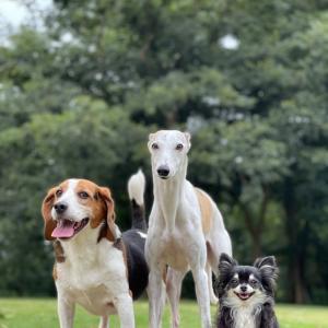 久しぶりに集う全犬種エリア。
