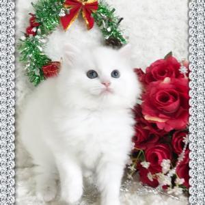 子猫の募集^_^