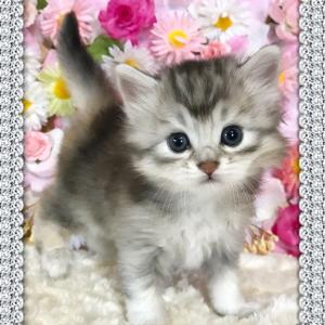 子猫の記念写真