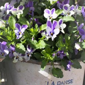 2月下旬 庭の花達を少し
