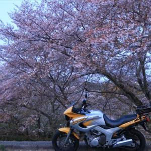散り桜いろいろ@湯谷峠越え そしてやっぱり水鏡
