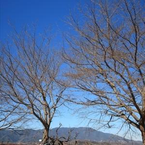 Grisoで冬晴れおさんぽ そしてまたボルト旅立つ