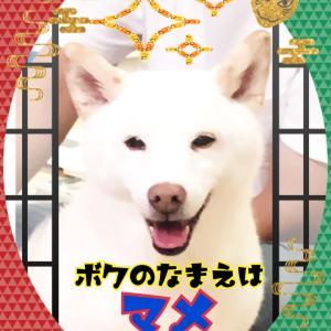 勝手に動物文化祭 〜リハーサル〜