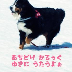 大型犬と介護生活  〜お役立ち情報〜