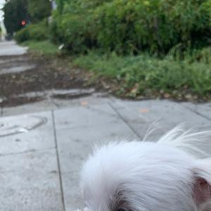 植木や標識が飛ばされてた…台風一過