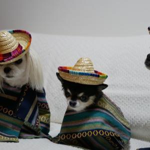 3 Amigos / 3人のアミーゴ!