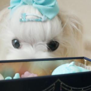 何なに?Jewel Box 宝石箱?