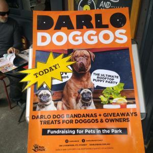 Darlo DOGGOS @ Darlinghurst