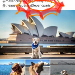 International Dog Day