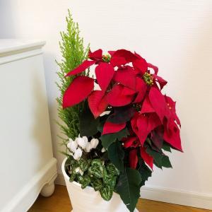 【少し早めのクリスマス気分♪】