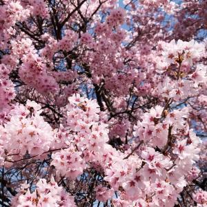 【4月になり♡】