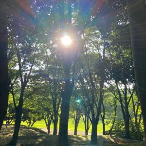☆森林公園で小次郎と散歩!