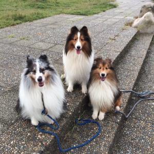 Fun Dog Training 楽しいドッグトレーニング