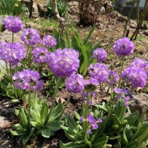 少し前の庭の花