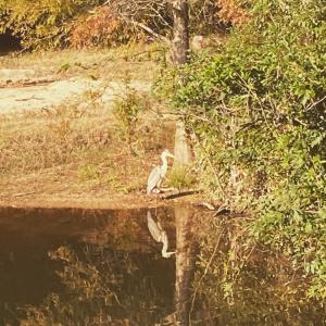兵庫県立甲山森林公園、動かない鳥