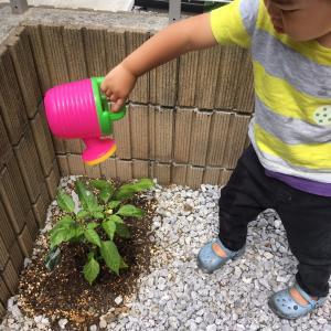 ◆イヤイヤ期の子こそ楽しめる!家庭菜園