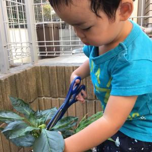◆小さい子と育てるおすすめの家庭菜園