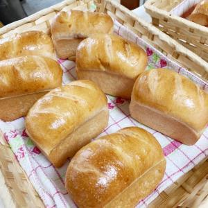 今日はパン教室