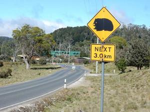 オーストラリア ⑭ (タスマニア  クレイドル山国立公園)