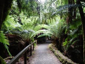 オーストラリア ⑳ (タスマニア マウントフィールド国立公園~ホバート)