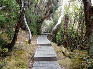 オーストラリア ⑮ (タスマニア  クレイドル山国立公園)
