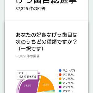 2018年げっしー選挙 デグーさん危うし!!